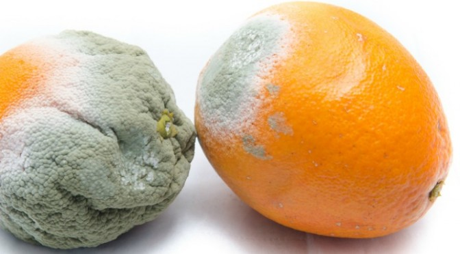 CRUSHED:  The agreement  ending the West Coast ports slowdown came too late for a lot of citrus and the people who grow them.