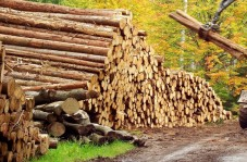 TIMBER! The Mississippi Department of Transportation helped Tallahatchie Lumber reduce its shipping expenses from $75 to $5.50 per piece for its wood mats.
