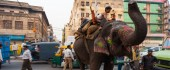 THE ELEPHANT IN THE STREET Traffic can be difficult in the world's most second-most populated country—even without elephants.