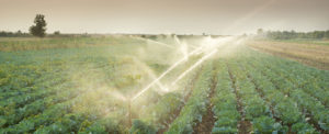The Challenges of Sustainable Food Supply Chains