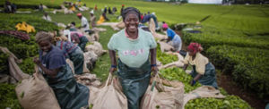 Tea and Potatoes Show Potential of Intra-Africa Agricultural Trade