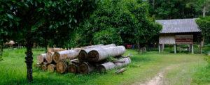 USTR Tests Peru's Progress in Combating Illegal Logging