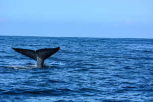 12 SHIPPING COMPANIES RECOGNIZED FOR PROTECTING BLUE WHALES AND BLUE SKIES