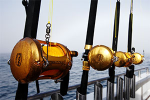 ANGLING INTERNATIONAL When Penn launches an addition to its iconic golden reel lineup, brand managers know their buyers will bite if they can test the product.