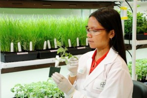 Bayer CropScience Opens New US Research Center
