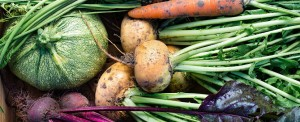 European Commission and Mexico Start Negotiations on Trade of Organic Products