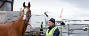 Thoroughbred Cargo Landing at Shannon