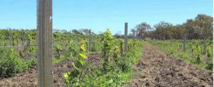 Wine is Key to Australian Auto Parts Manufacturer's Diversification