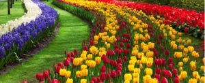 Data Sharing Platform at Schiphol Links Flower Shipment Data to Air Waybills